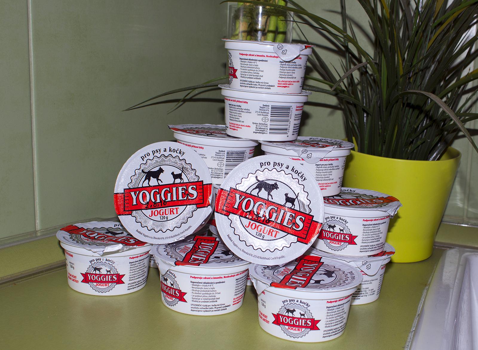 Kocici joguty