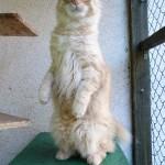 Alf webhotel pro kočky Miacis