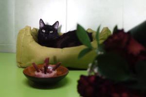Azíkovi narozeniny v hotelu pro kočky Praha