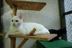 Bela a Lily v hotelu pro kočky Miacis Praha Smečno Kladno Plzeň