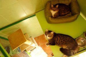 Beruška a Bertík v hotelu pro kočky Miacis Praha a Smečno web