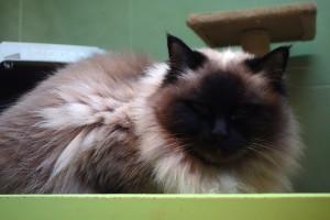 Boženka v hotelu pro kočky Miacis Smečno Praha web