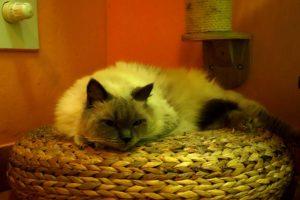 Casper v kočičím hotelu Miacis Praha