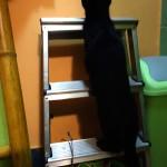 Charlie v hotelu pro kočky Miacis