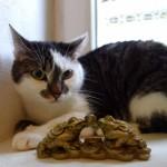 Evropská kočička Sisi v hotelu pro kočky