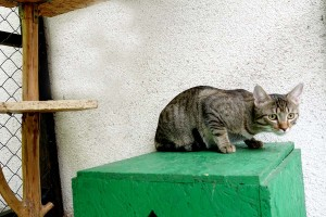 Gargy číhá na sýkorku v hotelu pro kočky Miacis Praha Smečno