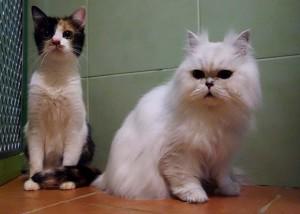 Kotě a Morphy v hotelu pro kočky