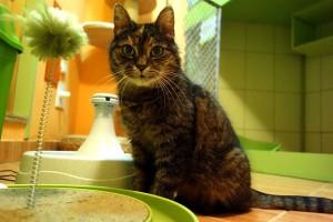 Laduška v hotelu pro kočky Miacis Praha Smečno