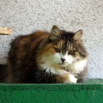 Ljusja listopad hotel pro kočky