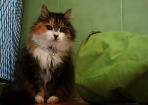 Ljusjenka v hotelu pro kočky Miacis Smečno