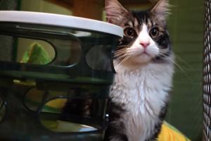 Max v hotelu pro kočky Miacis