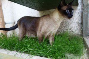 Minušce se v travičce hotelu pro kočky Praha líbí