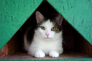 Rendy v hotelu pro kočky Miacis Praha,Smečno,Kladno ,Karlovy Vary