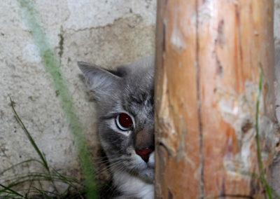 Sany v hotelu pro kočky Miacis sMEČNO, pRAHA,kLADNO,lOUNA
