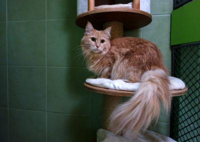 Sisinka v hotelu pro kočky Miacis Praha,Smečno,Smíchov , Dejvice