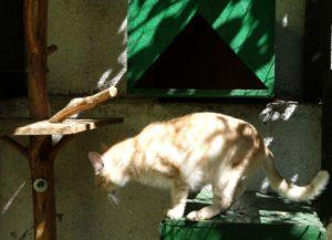 Tobiášek web v hotelu pro kočky Miacis v Smečně v Praze