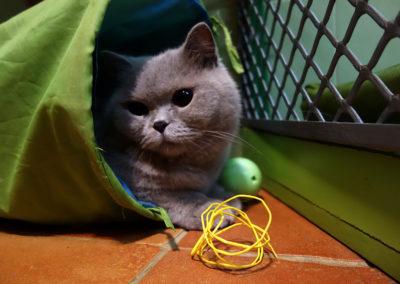 Ziky v hotelu pro kočky miluje tunel Praha