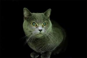 myša web v hotelu pro kočky miacis smečno