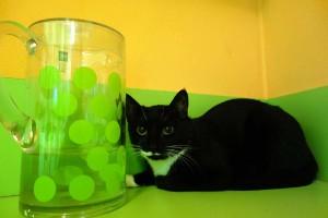 web hotel pro kočky