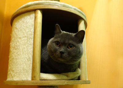 Udo v hotelu pro kočky Miacis Praha,Kladno,Smečno,Louny