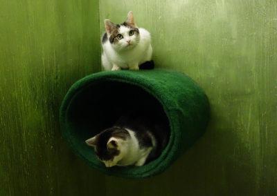 Adámek a hyneček v hotelu pro kočky Miacis Smeečno,Praha, Postoloprty,Louny