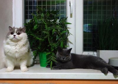 Megie a Zuzanka v hotelu pro kočky Miacis Praha,Sezimovo Ústí,Žatec