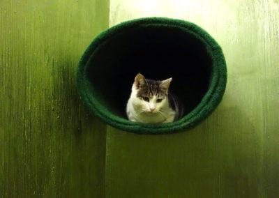 Bratr wright v hotelu pro kočky Miacis Smečno,Praha,Bílina