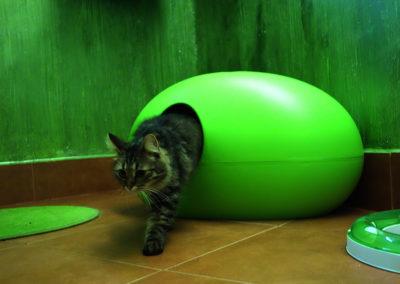 Sisi v hotelu pro kočky Miacis Praha