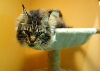 Arwen vhotelu pro kočky MiacisPraha,BerouN