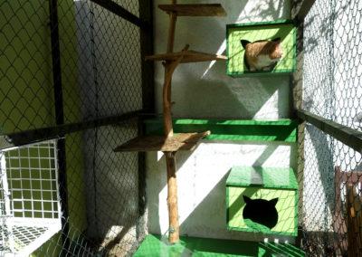 Tomíček v nově rekonstruovaném výběhu v hotelu pro kočky Miacis SmečnoPraha