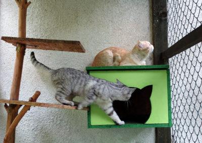 Cindy a Titan v hotelu pro kočky Miacis