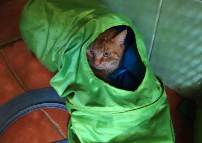 Franta v rukávu v hotelu pro kočky Miacis Praha,Smečno,Kladno