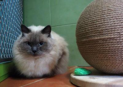Casper v hotelu pro kočky Miacis Praha,Rakovník