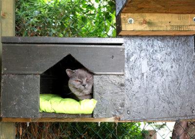 Udo v hotelu pro kočky Miacis Praha,Smečno, Lidice,Kladno