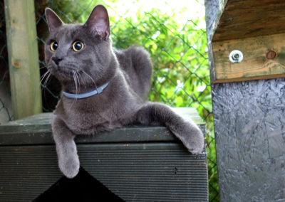 Modrýruský elegán v hotelu pro kočky Miacis Praha
