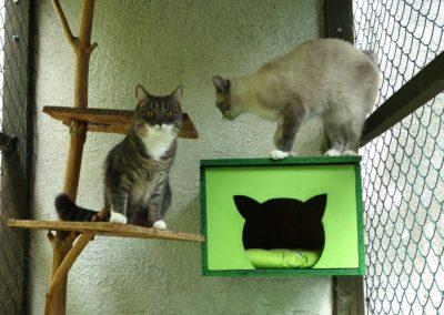 Dášenka a Maxík v hotelu pro kočky Miacis Smečno
