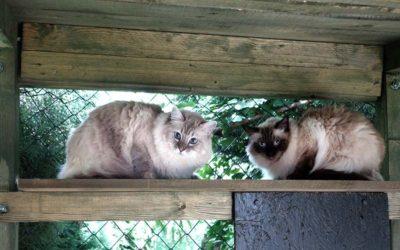 Kočičí parťáci paní Venduly