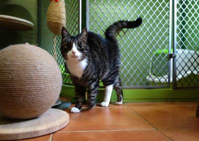 Alan v hotelu pro kočky Miacis